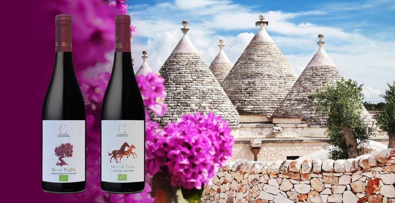 Vin blanc Bruxelles Biocantina Giannattasio