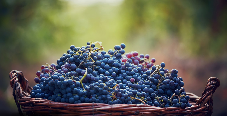 Rode wijnen Altanatura