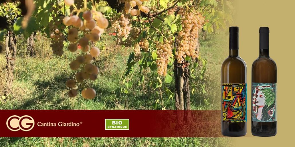 Vin blanc Brussel Cantina Giardino - 3