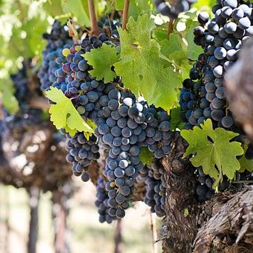 I vini rossi nella bottega Altanatura